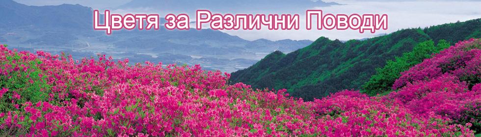 Букети Хризантеми